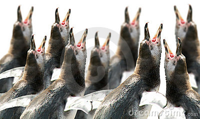 Choir of penguins