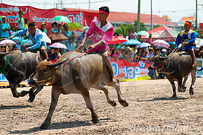 Chonburi Buffalo Races Editorial Stock Photo