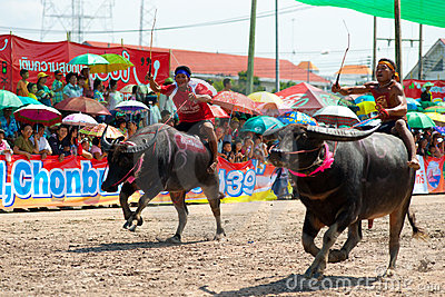 Chonburi Buffalo Races Editorial Image