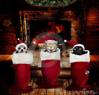 Free Christmas Animals In Stockings Royalty Free Stock Photo - 22538645