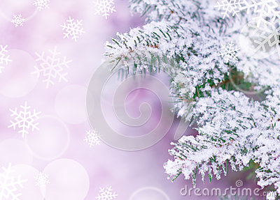 Christmas Background with Fir-tree and Snow