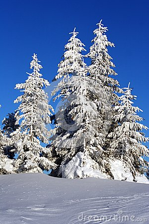 Free Christmas Background With Snowy Fir Trees. Stock Photos - 48069643
