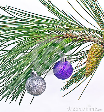 Christmas ball on pine fir tree branches isolated