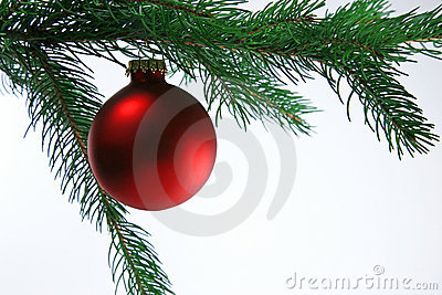 Christmas Ball on Tree, white background