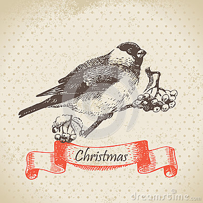 Christmas bullfinch and ashberry