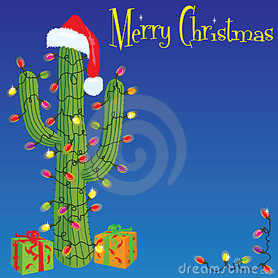 Free Christmas Cactus Stock Photo - 11687010