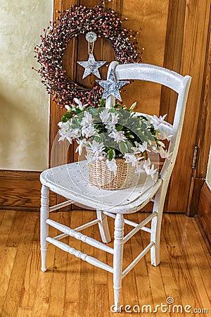Free Christmas Cactus Royalty Free Stock Photo - 46631405