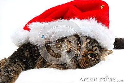 Christmas cat 2