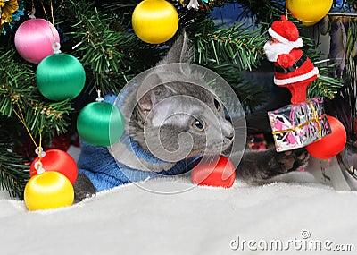 Christmas cat among a fur-tree