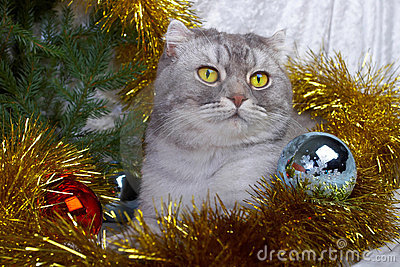 Christmas cat among a fur-tree