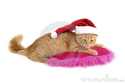 Christmas cat relax on pillow