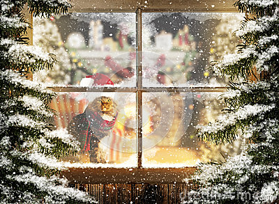 Christmas Cat Sitting At Window Stock Photo Image 50918806