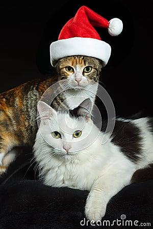 Cats with Santa cap