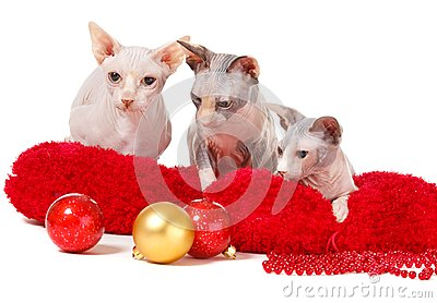 Christmas Cats Stock Photography - Image: 17405132