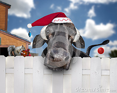 Christmas cow wearing santa hat