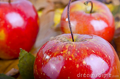 Christmas decoration with red apples