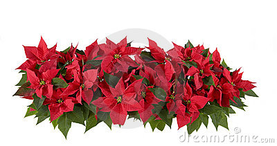Christmas Decorations - Red Poinsettia