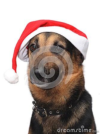 Free Christmas Dog Stock Photography - 12261602