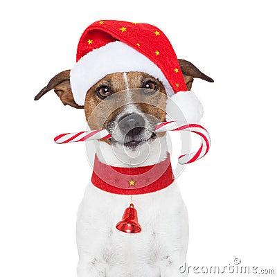 Free Christmas Dog Royalty Free Stock Images - 25993879
