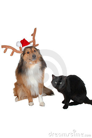 Christmas dog with black cat