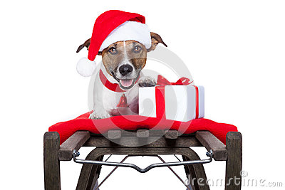 Christmas dog on sleigh
