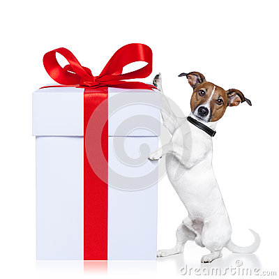 Free Christmas Dog With Present Royalty Free Stock Photo - 26257905