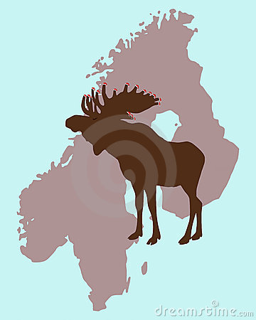 Christmas Elk  in Scandinavia