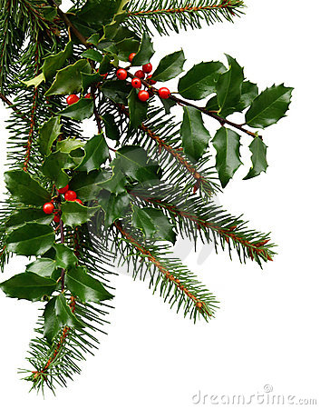 Free Christmas Evergreens Royalty Free Stock Images - 3027139