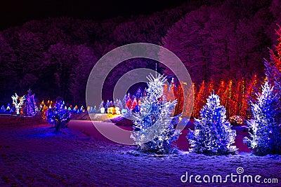 Christmas fantasy - pine trees in x-mas lights
