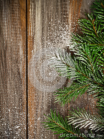 Christmas fir tree covered with snow