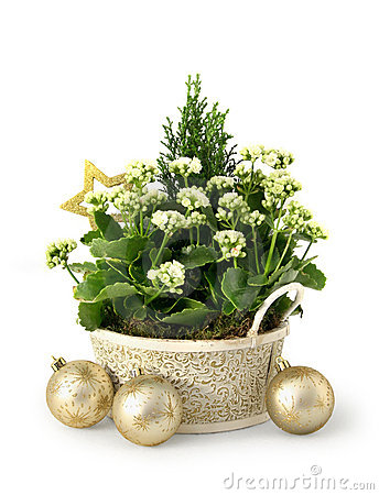 Free Christmas Flower Stock Images - 14961534