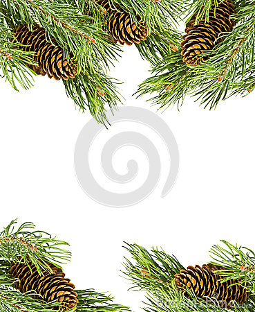 Christmas frame made ​​of fir branches