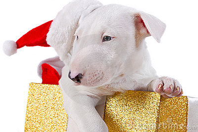 Christmas gift box with puppy