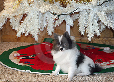 Christmas Gift Puppy