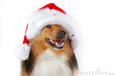 Christmas happy dog