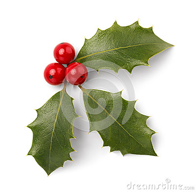Free Christmas Holly Royalty Free Stock Images - 35210599