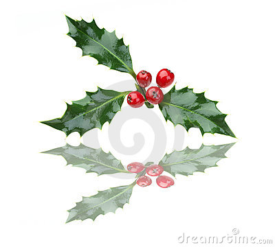 Free Christmas Holly And Red Berries With Reflection Stock Photos - 15386983
