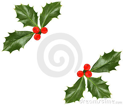 Christmas holly  - design element