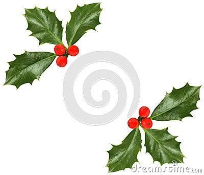 Christmas holly  - design element