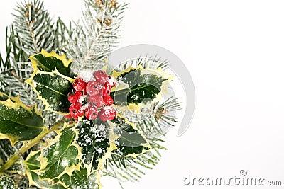 Christmas Holly & Pine