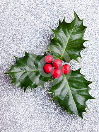 Free Christmas Holly With Red Berries Royalty Free Stock Photography - 34920687