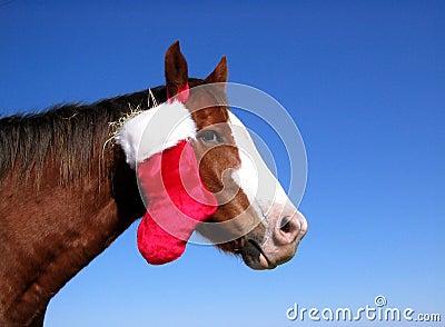 Christmas Horse