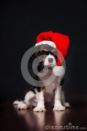 Free Christmas King Charles Spaniel Dog With Santa Hat Royalty Free Stock Photo - 130066795