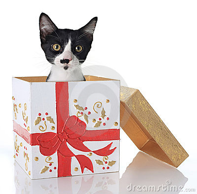 Free Christmas Kitten Stock Photo - 11562010