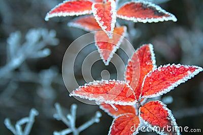 Christmas leafs