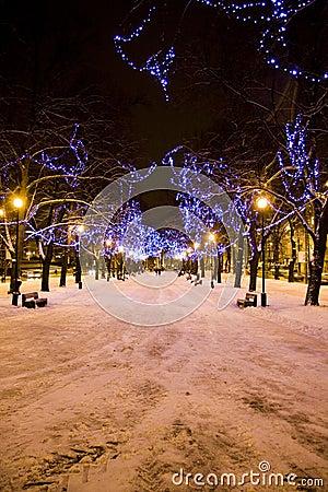 Christmas lights on trees in Tallinn, Estonia