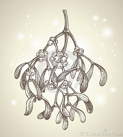 Christmas mistletoe branch drawing