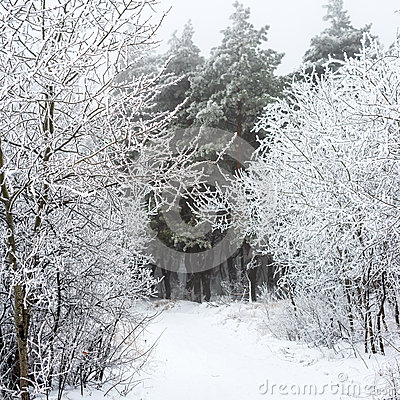 mysterious forest in winter - photo #25