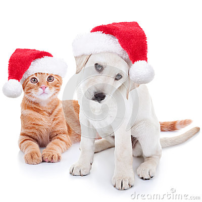 Free Christmas Pets Dog And Cat Royalty Free Stock Images - 61788759