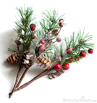 Christmas Pine Branches With Berries Stock Photo Image